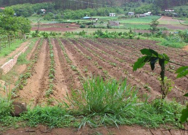 đất trồng cây lâu năm có được xây nhà không