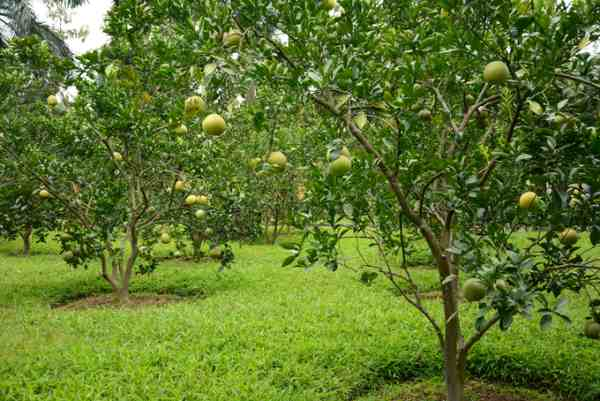 đất trồng cây lâu năm là gì 2019