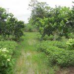 Đất trồng cây hàng năm khác là gì? Có lên thổ cư được không?