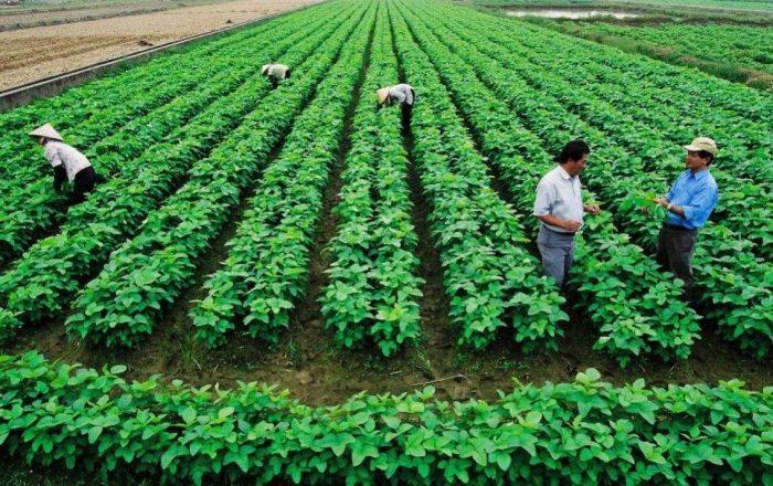 Đất trồng cây hàng năm khác là gì