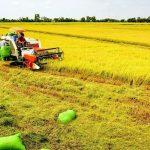 Đất trồng lúa là gì? Có được chuyển nhượng? Lên thổ cư không?
